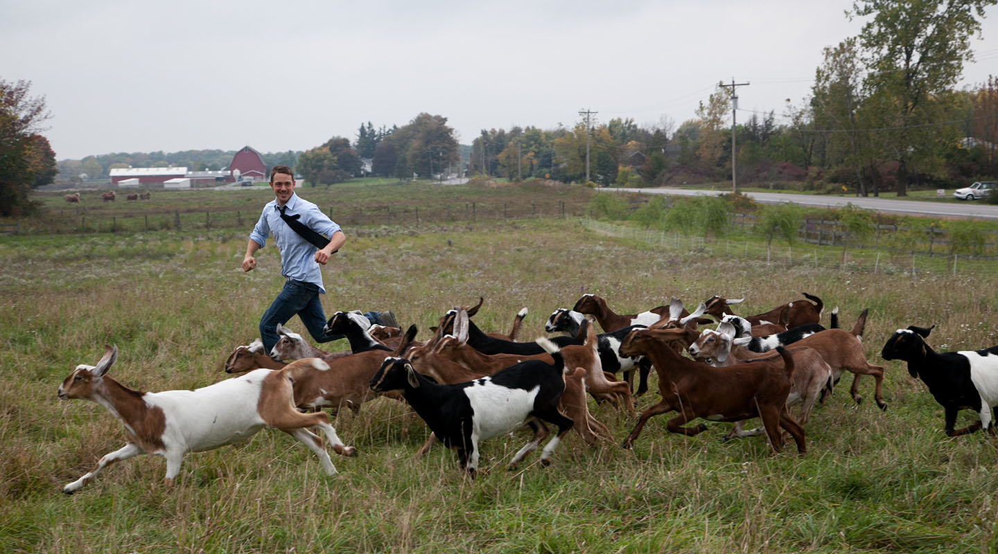 Max Sandvoss '98 runs with the herd at First Light Farm & Creamery in Upstate New York.
