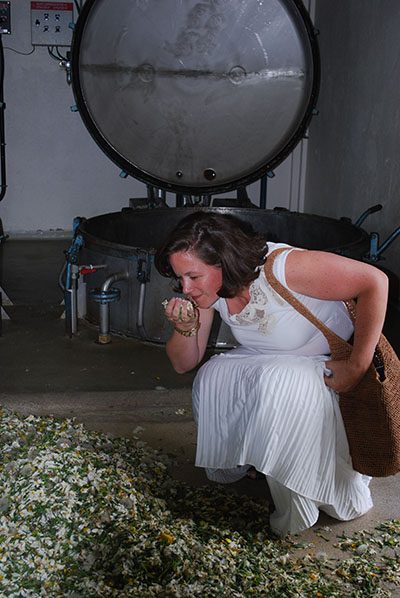 Balavoine smells the narcissus flowers in Mane, France, before the petals are distilled into essential oil.